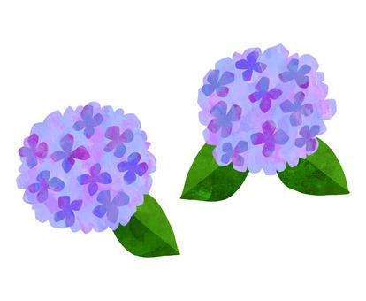 Hydrangea watercolor illustration <Purple>