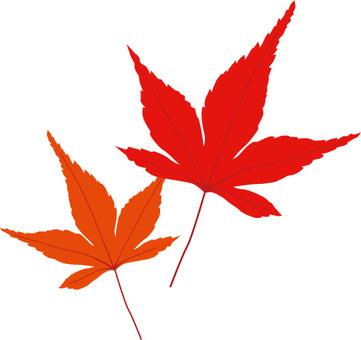 Feuilles de feuilles d'automne