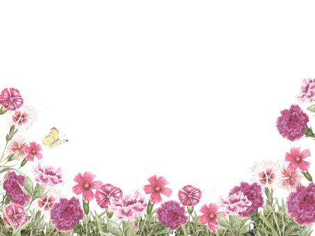 꽃 테두리 114- 카네이션과 나데시코