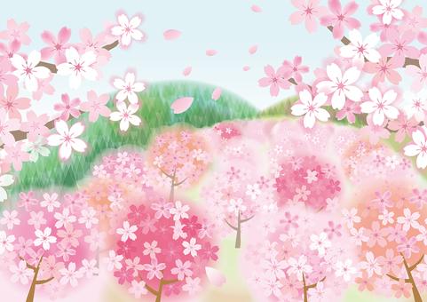 Spring landscape cherry tree 1