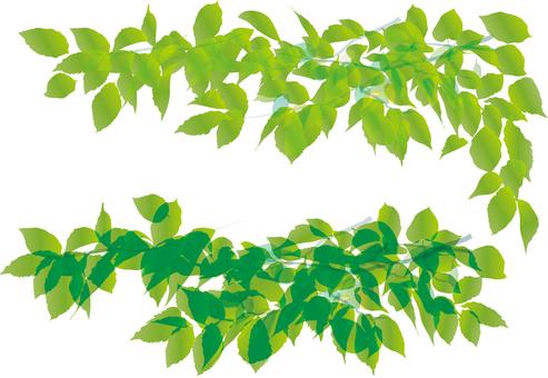Leaf green frame framing decorative frame fresh green young leaves