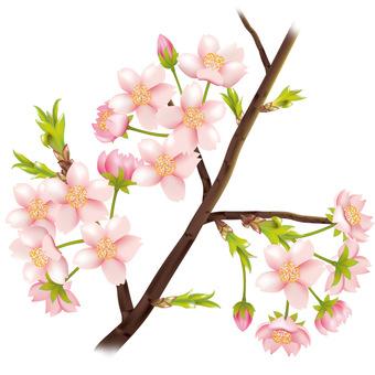 Cherry branch 03