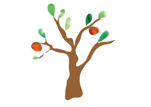 Persimmons and persimmon trees