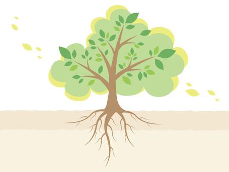 根を張った樹木