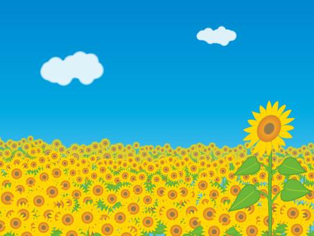 Sunflower and blue sky 2