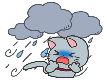 台風を怖がる猫