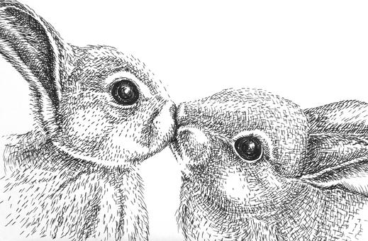 Rabbit pen drawing 2