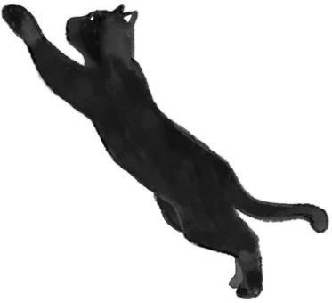 Black cat jump