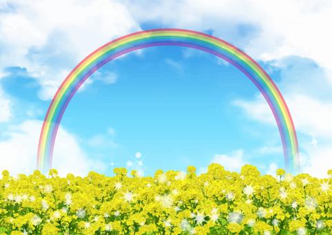 Glittering rape blossoms and rainbow