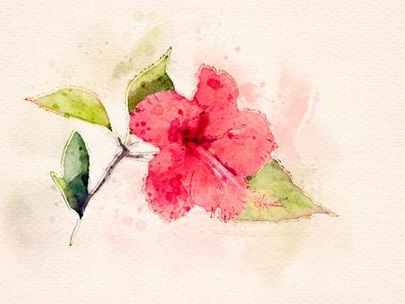 [Watercolor] Hibiscus