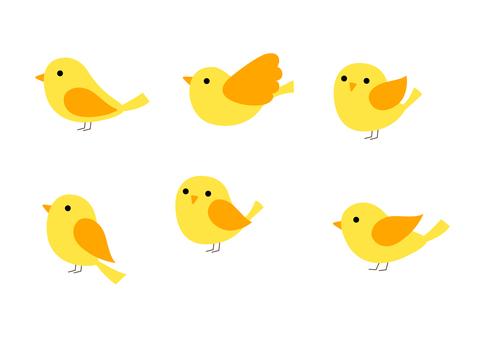 Mr. Birds 16