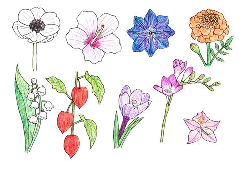 꽃 6 히비스커스 컬러