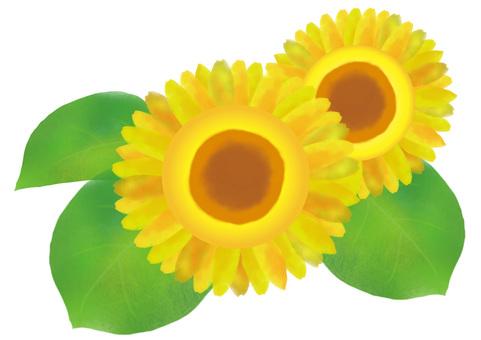 Sunflower 2 rounds