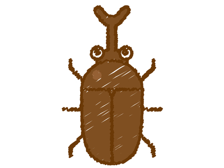 Beetle insect