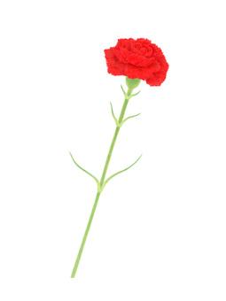 1 carnation