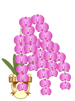 Phalaenopsis orchid mushroom