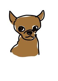 Dog 81