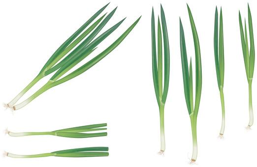 Kujo green onion / vegetables