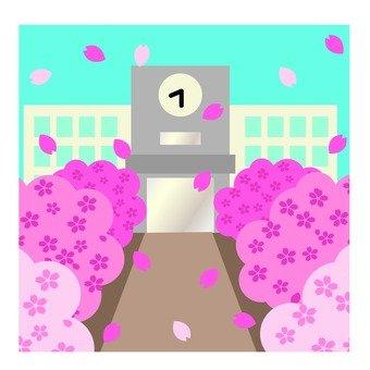 School building where cherry blossom petals dance