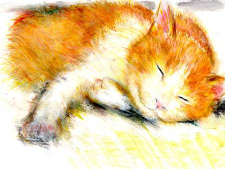 A cat sleeping relaxing on tatami
