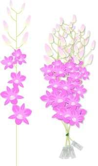 Denfare purple