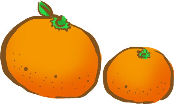 【Ohumono shop】 Mandarin orange in summer and winter