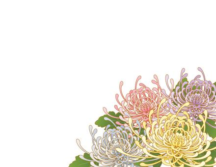 Rangiku background _ white