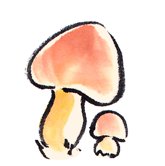 "Mushroom ""handwritten material"""