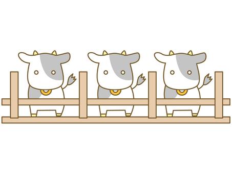 Livestock cattle