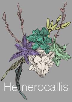 Hemerocallis [2]