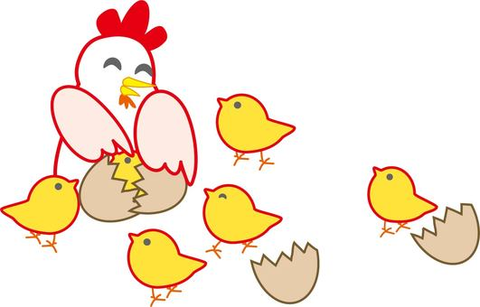 Chickens and chicks