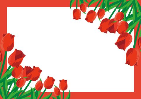 Tulip frame