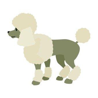 Dog - Poodle