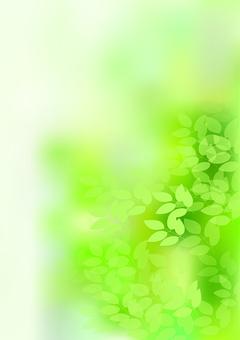 Fresh green 70