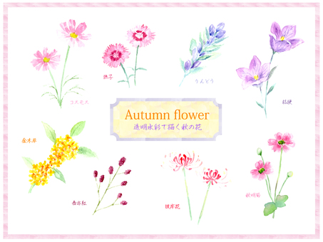 Autumn flower set drawing with transparent watercolor