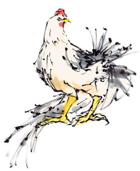 "Rooster ""handwritten material"""