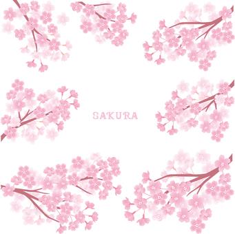 桜枝 세트