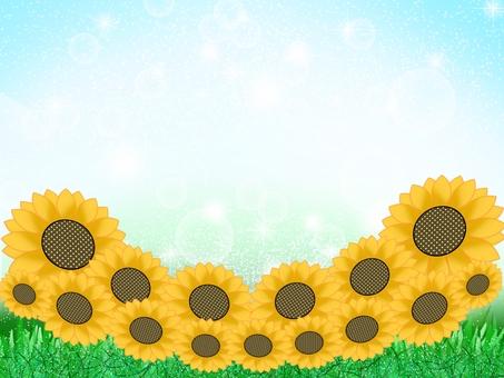 夏天 - 向日葵田〜