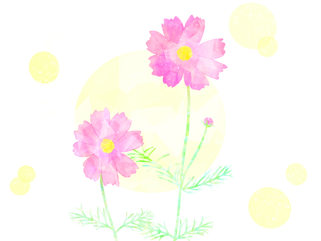 Cosmos (pink)