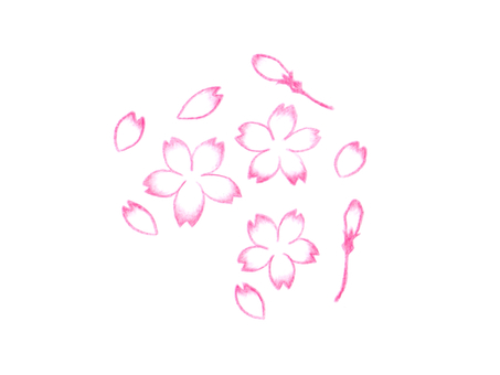 [Colored pencil] cherry blossom illustration