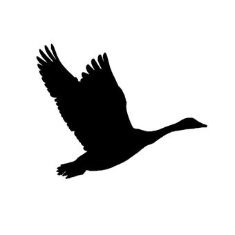Migratory bird silhouette