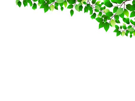 잎의 배경