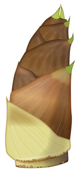 Bamboo shoot 2 / Vegetable