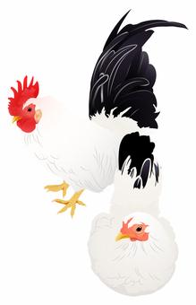 Chicken 12
