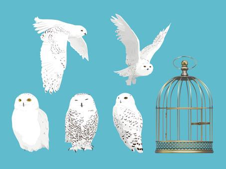 Snowy owl set