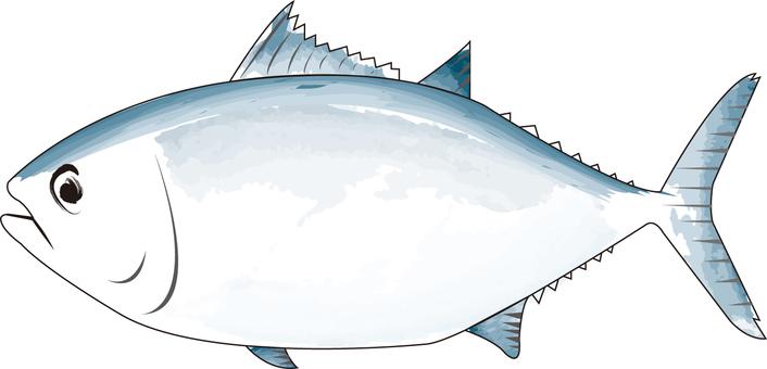 Sumi-eyed tuna