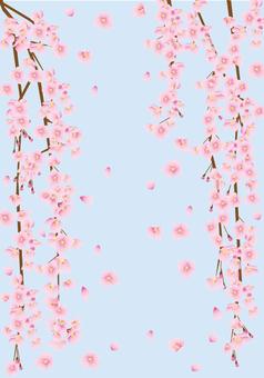 和 しだれ桜 背景