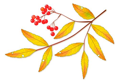 Autumn Nanakamado