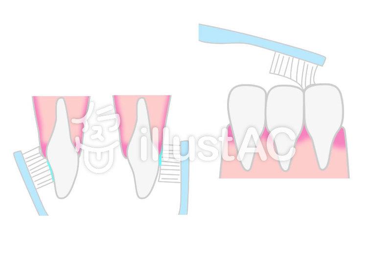 前歯の磨き方イラスト No 739721無料イラストならイラストac
