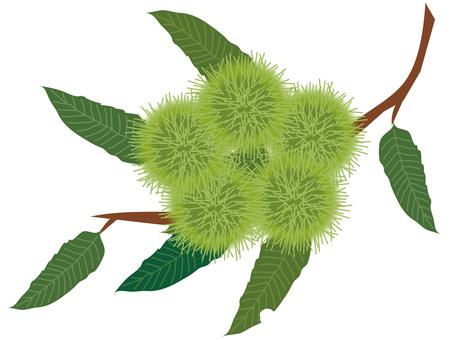 Chestnut branch _ 2